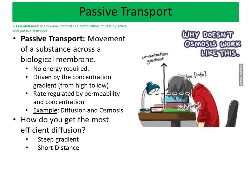 Passive Transport • Essential idea: Membranes control the composition of cells by active and passive transport.