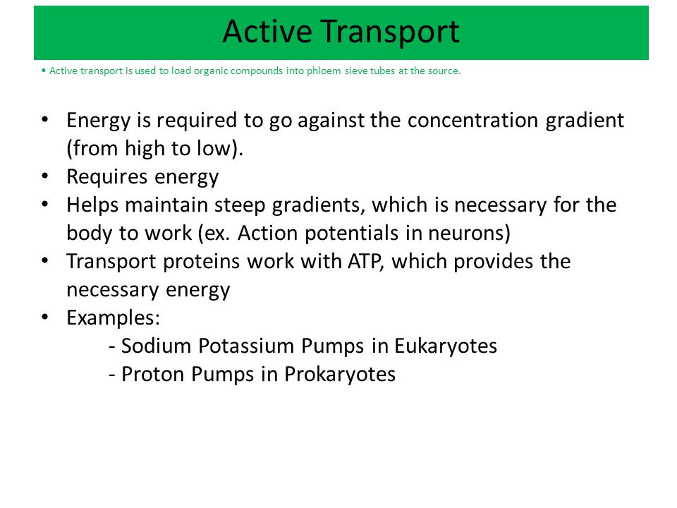 Active Transport • Active transport is used to load organic compounds into phloem sieve tubes at the source.