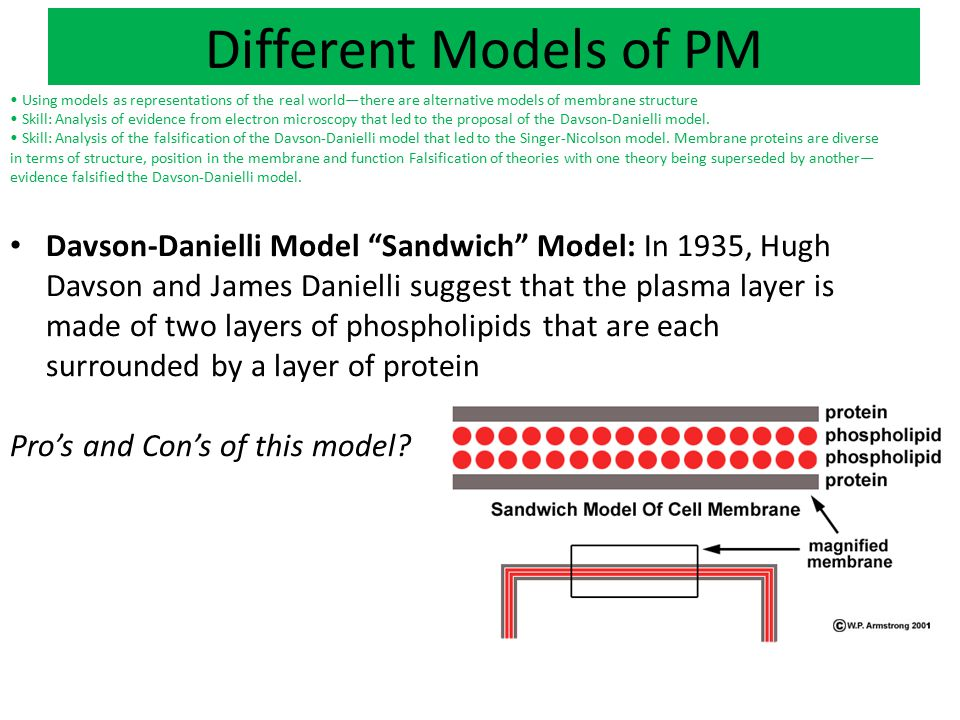 Different Models of PM • Using models as representations of the real world—there are alternative models of membrane structure.
