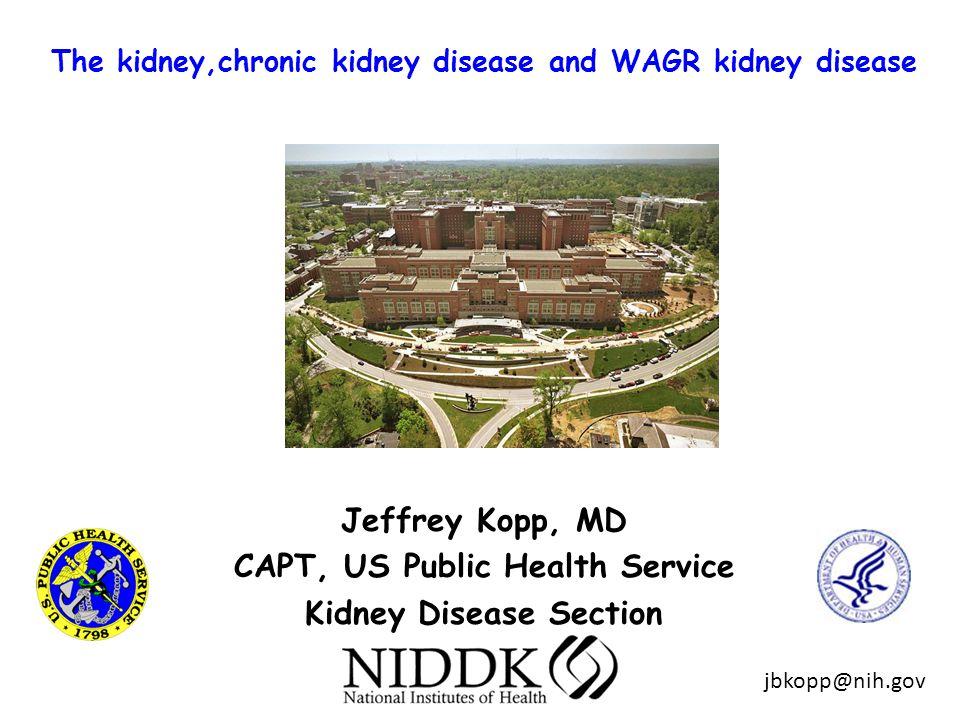 The kidney,chronic kidney disease and WAGR kidney disease