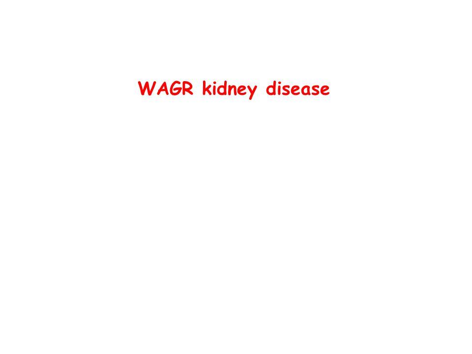 WAGR kidney disease