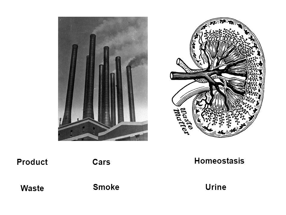 Product Cars Homeostasis Waste Smoke Urine