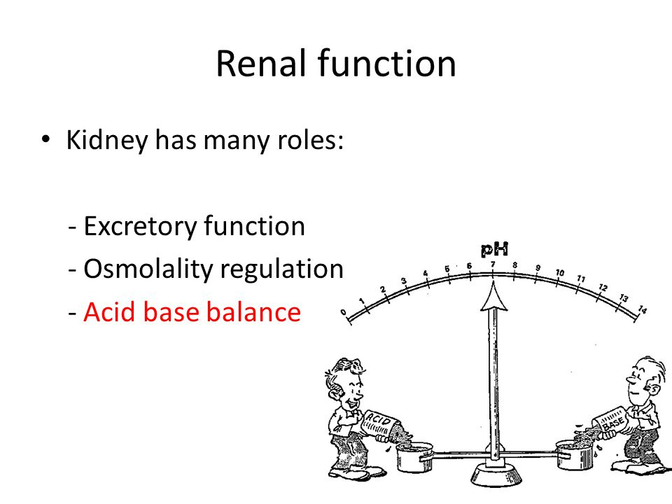Renal function Kidney has many roles: - Excretory function