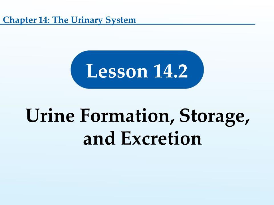 Urine Formation, Storage, and Excretion