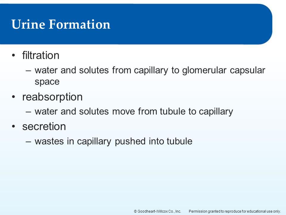 Urine Formation filtration reabsorption secretion