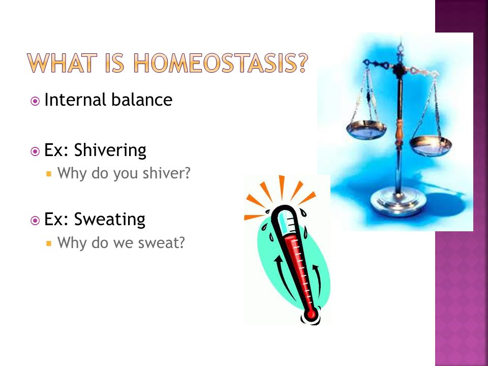 What is homeostasis Internal balance Ex: Shivering Ex: Sweating