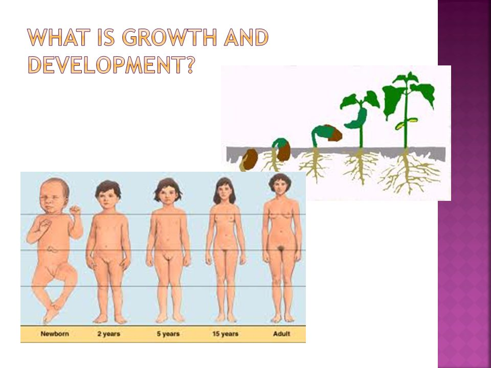 What is growth and development