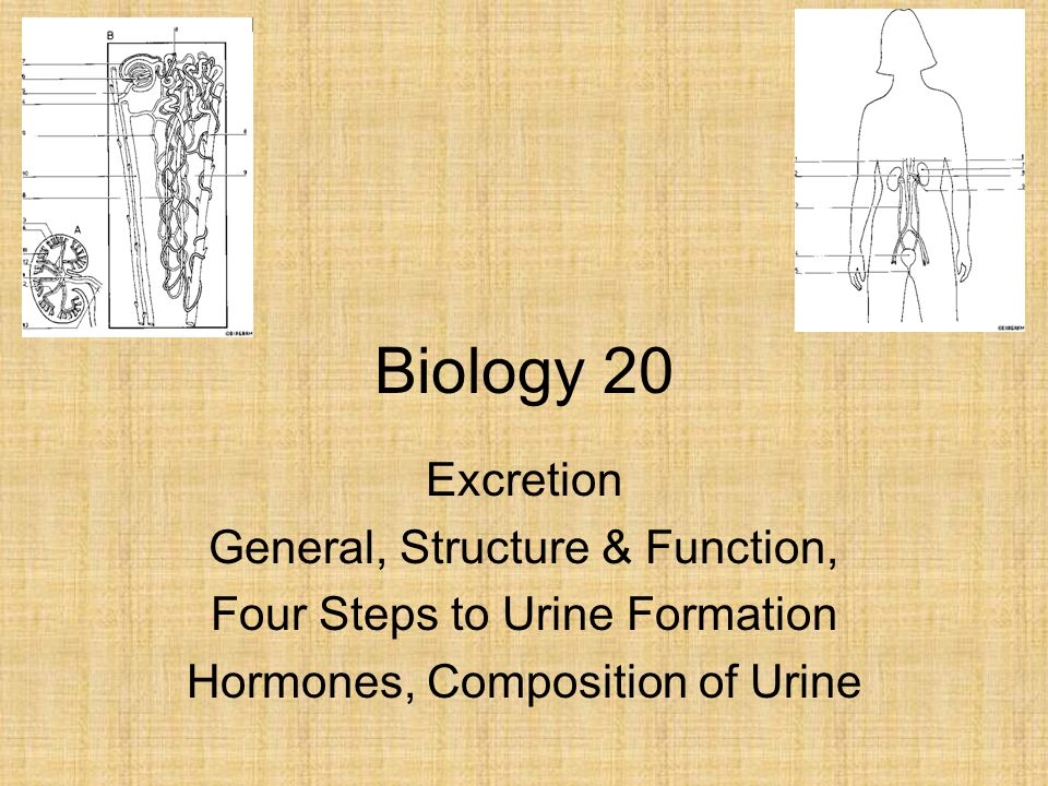 Biology 20 Excretion General, Structure & Function,