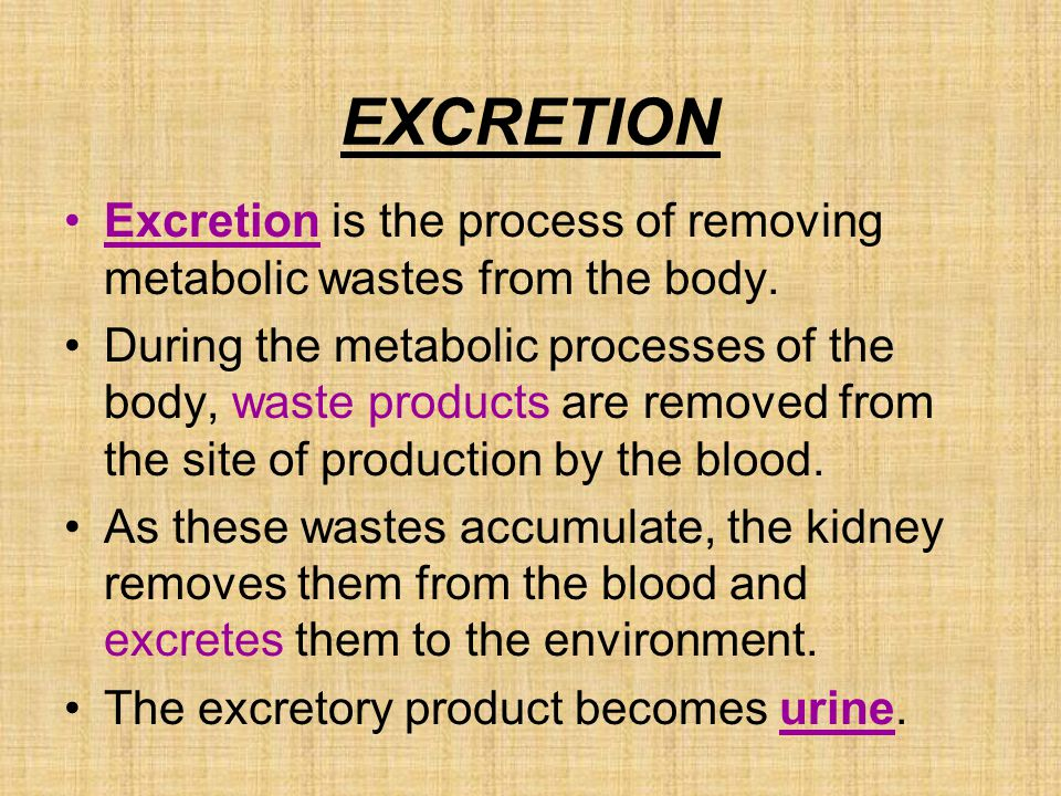 EXCRETION Excretion is the process of removing metabolic wastes from the body.
