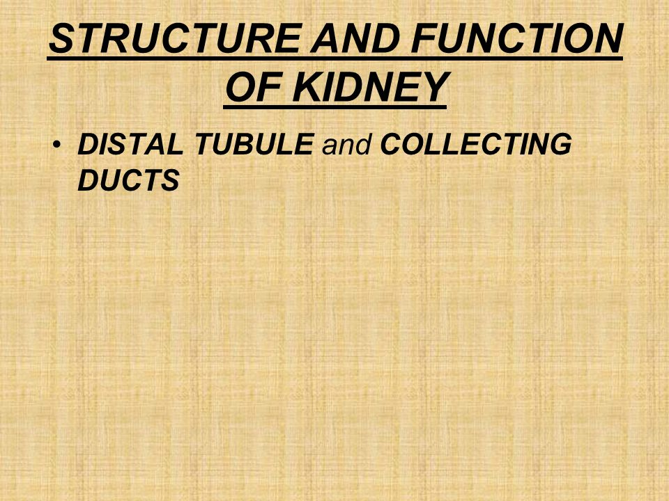 STRUCTURE AND FUNCTION OF KIDNEY