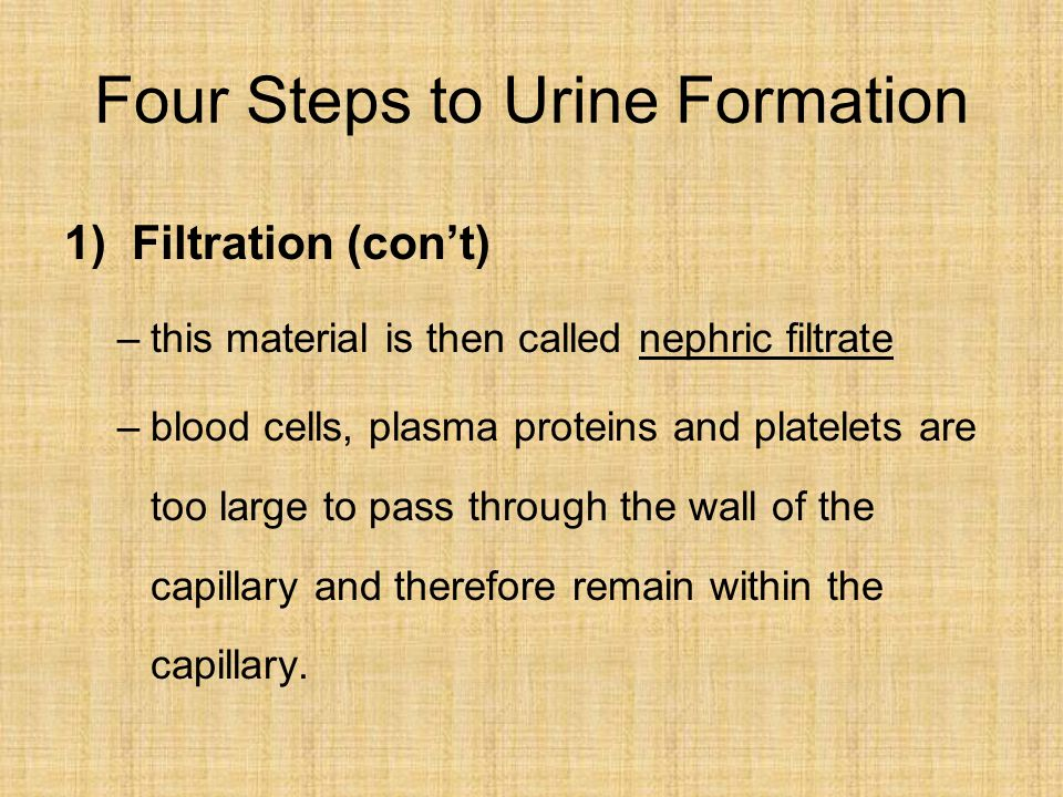 Four Steps to Urine Formation