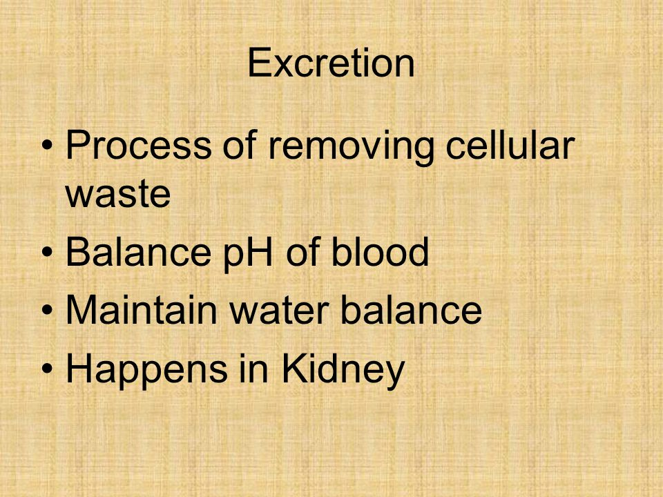 Excretion Process of removing cellular waste. Balance pH of blood.
