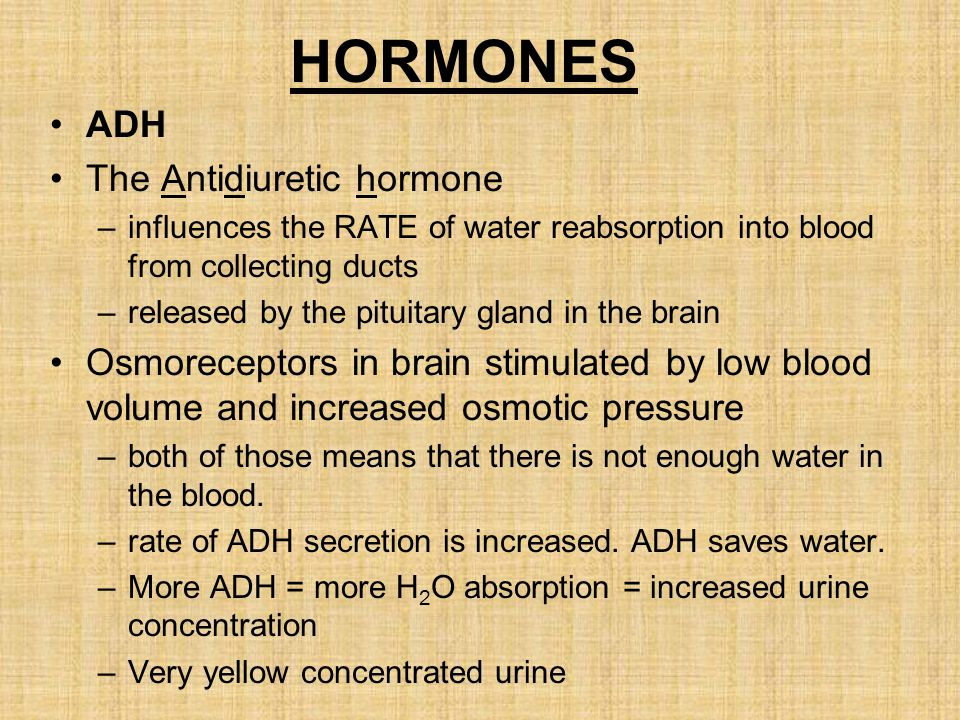 HORMONES ADH The Antidiuretic hormone