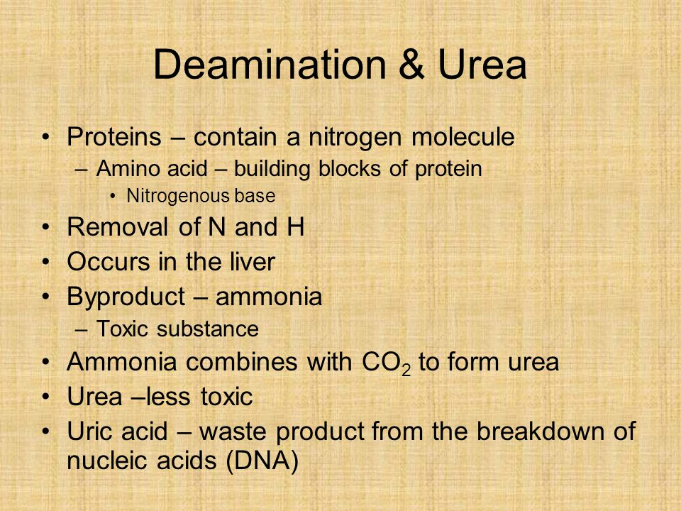 Deamination & Urea Proteins – contain a nitrogen molecule