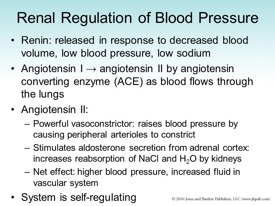Renal Regulation of Blood Pressure