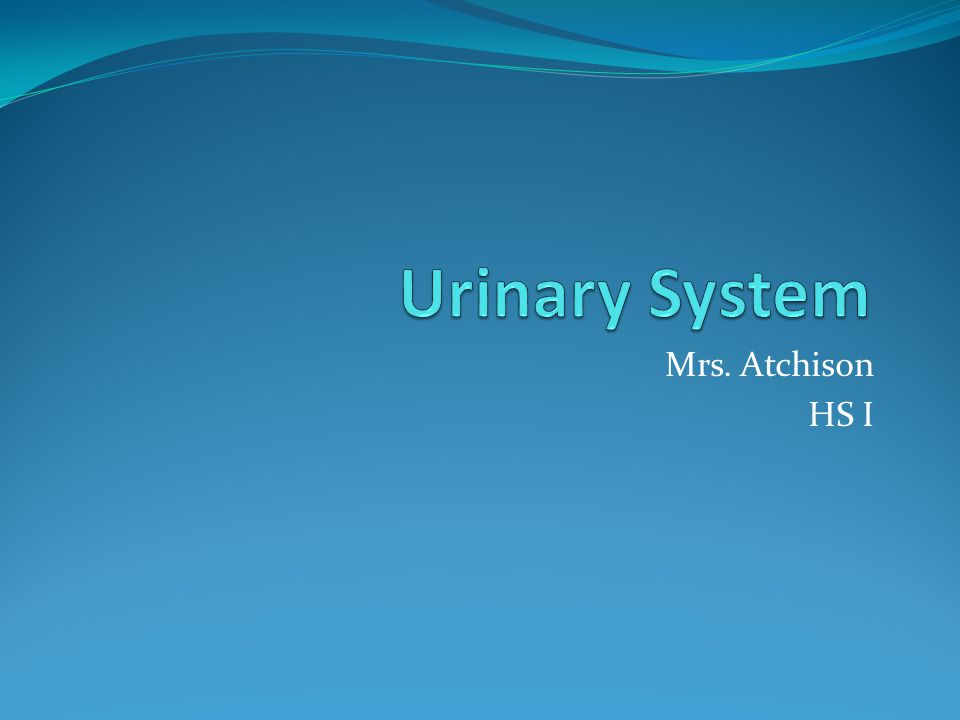 Urinary System Mrs. Atchison HS I