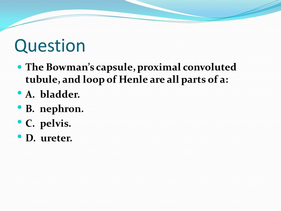 Question The Bowman's capsule, proximal convoluted tubule, and loop of Henle are all parts of a: A. bladder.