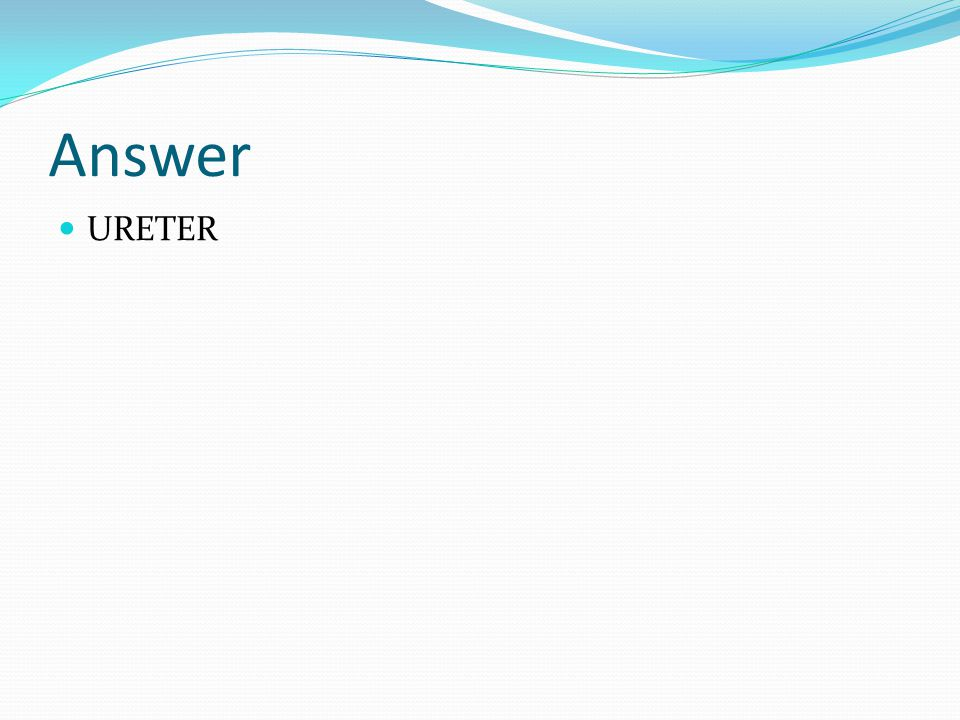 Answer URETER