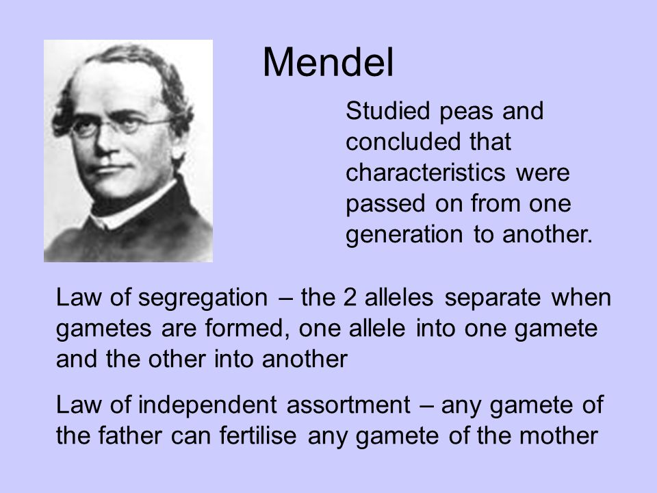 Mendel Studied peas and concluded that characteristics were passed on from one generation to another.