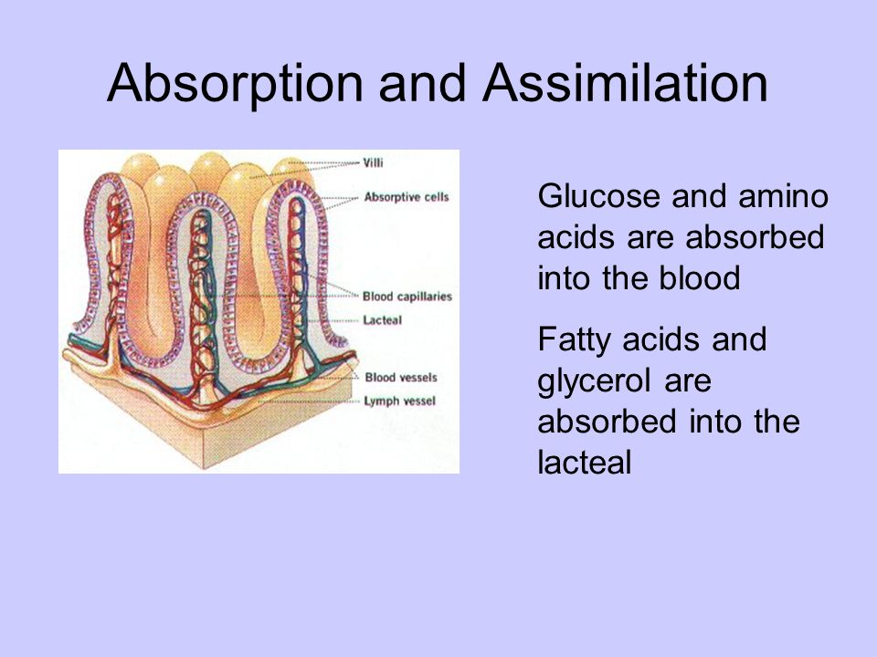 Absorption and Assimilation