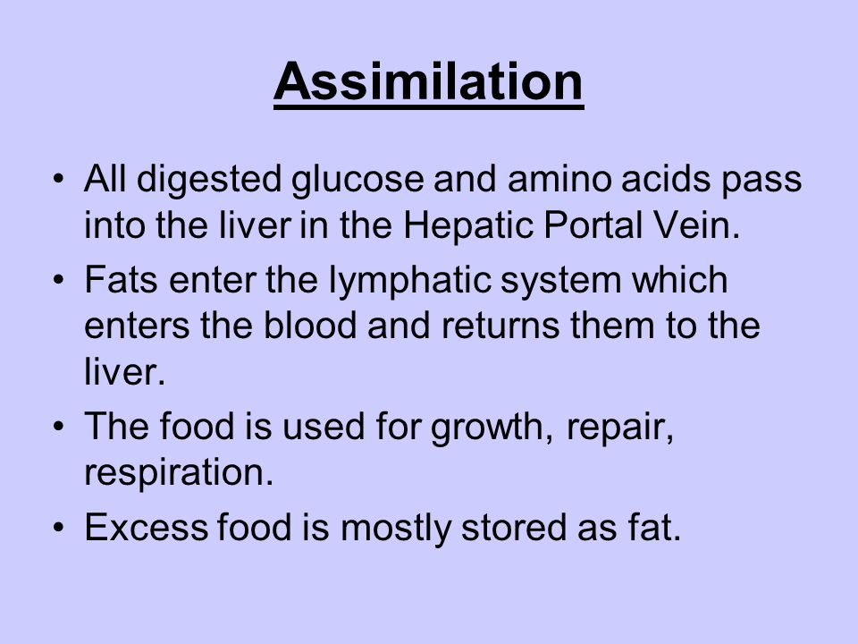 Assimilation All digested glucose and amino acids pass into the liver in the Hepatic Portal Vein.