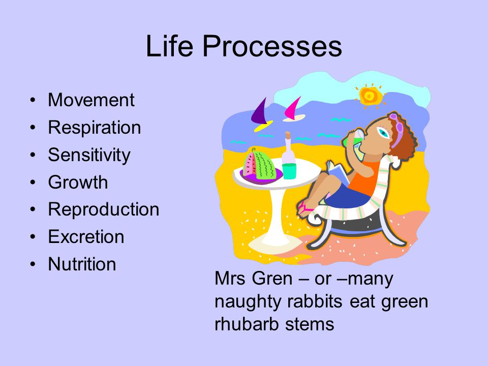 Life Processes Movement Respiration Sensitivity Growth Reproduction
