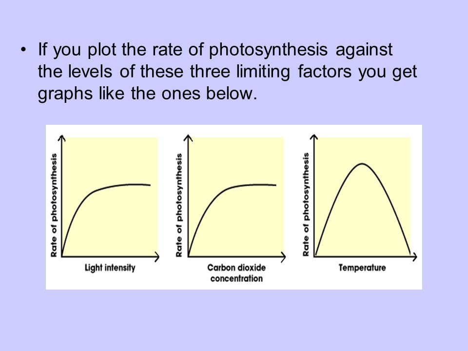 If you plot the rate of photosynthesis against the levels of these three limiting factors you get graphs like the ones below.