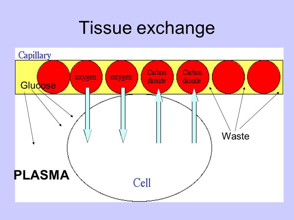 Tissue exchange Glucose Waste PLASMA