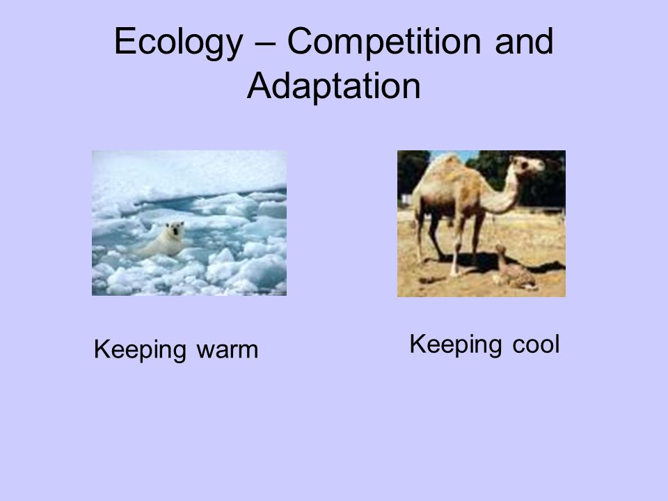 Ecology – Competition and Adaptation