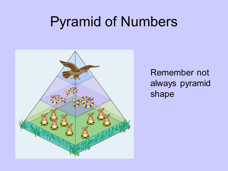 Pyramid of Numbers Remember not always pyramid shape
