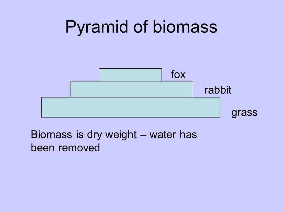Pyramid of biomass fox rabbit grass