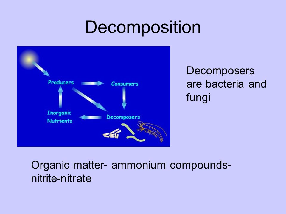 Decomposition Decomposers are bacteria and fungi