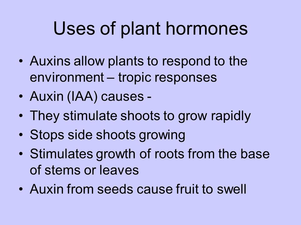 Uses of plant hormones Auxins allow plants to respond to the environment – tropic responses. Auxin (IAA) causes -