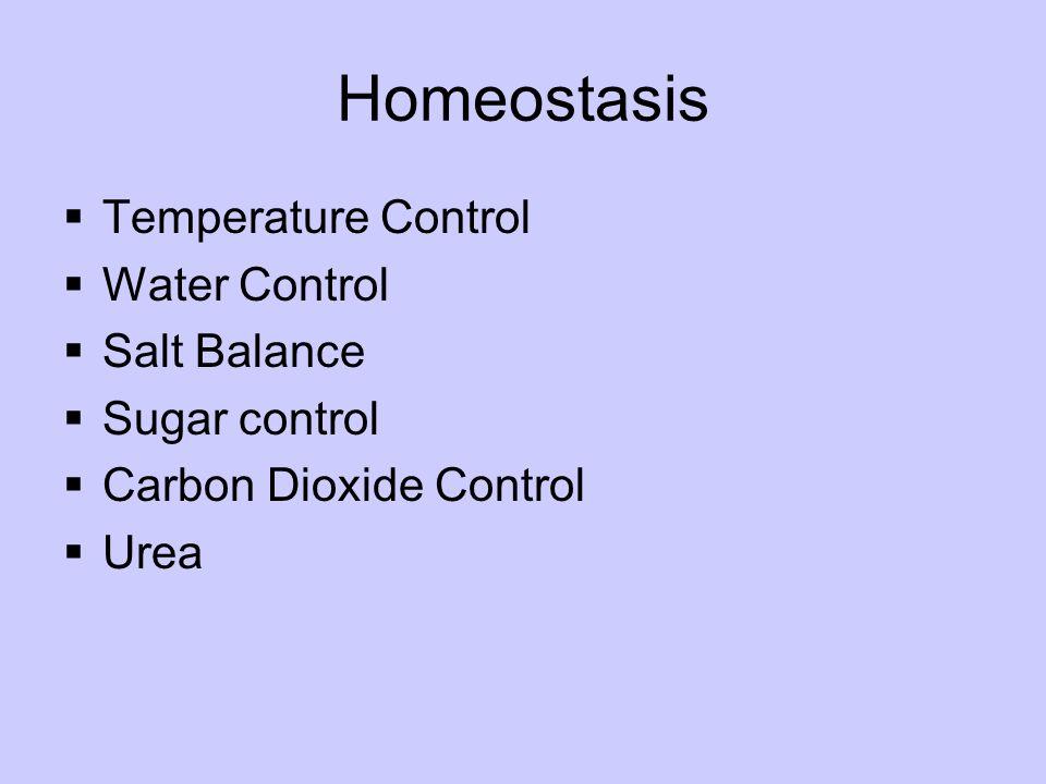 Homeostasis Temperature Control Water Control Salt Balance