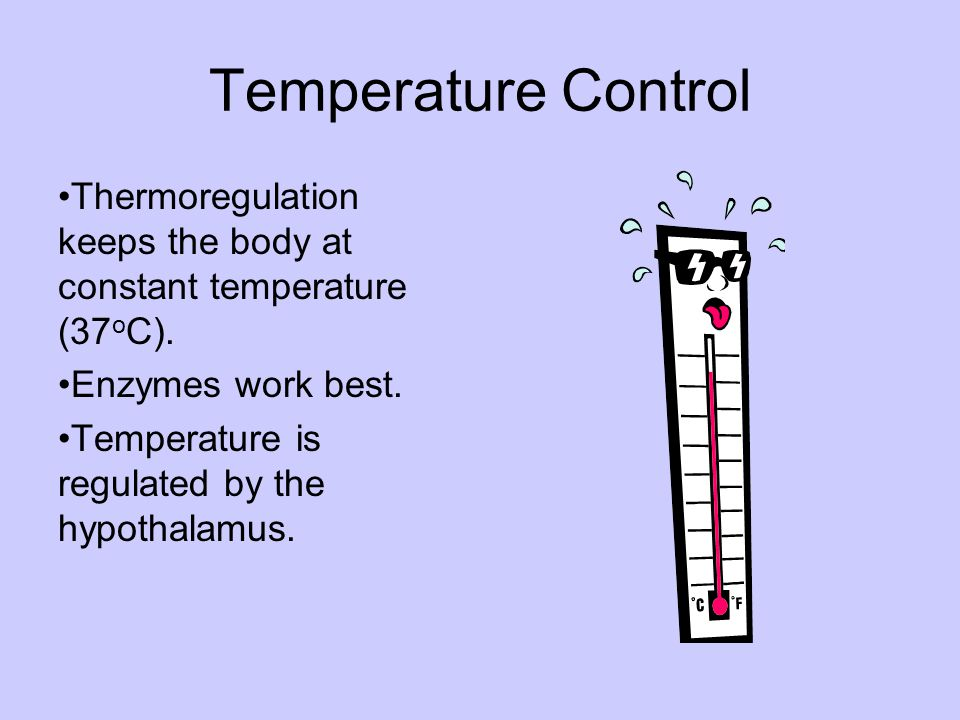 Temperature Control Thermoregulation keeps the body at constant temperature (37oC). Enzymes work best.