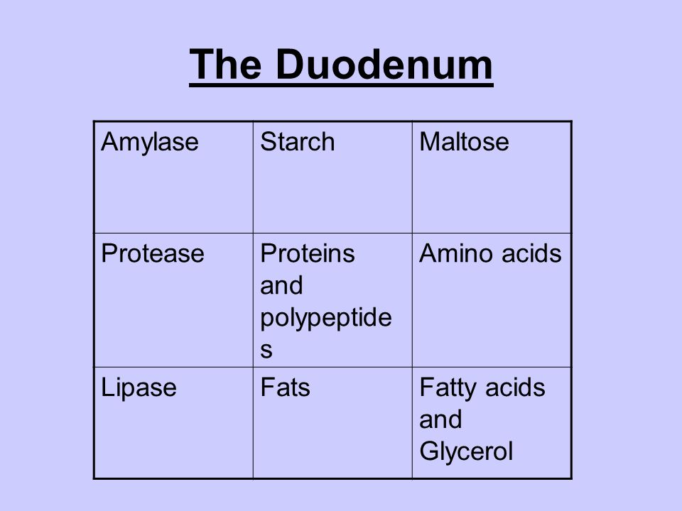 The Duodenum Amylase Starch Maltose Protease Proteins and polypeptides