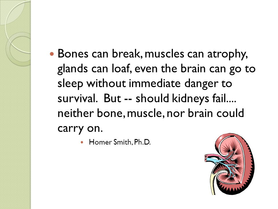 Bones can break, muscles can atrophy, glands can loaf, even the brain can go to sleep without immediate danger to survival. But -- should kidneys fail.... neither bone, muscle, nor brain could carry on.