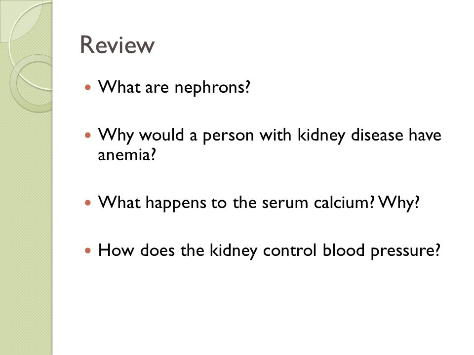 Review What are nephrons