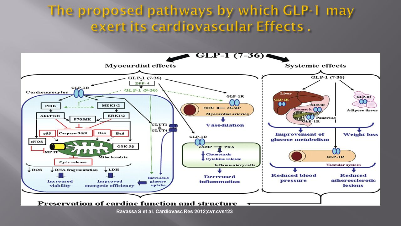 The proposed pathways by which GLP-1 may exert its cardiovascular Effects .
