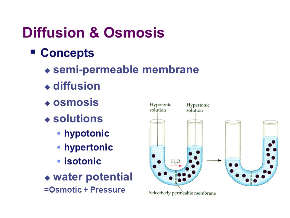 Diffusion & Osmosis Concepts semi-permeable membrane diffusion osmosis