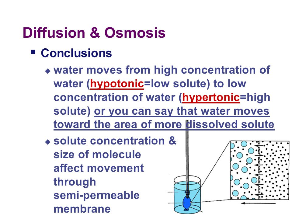 Diffusion & Osmosis Conclusions