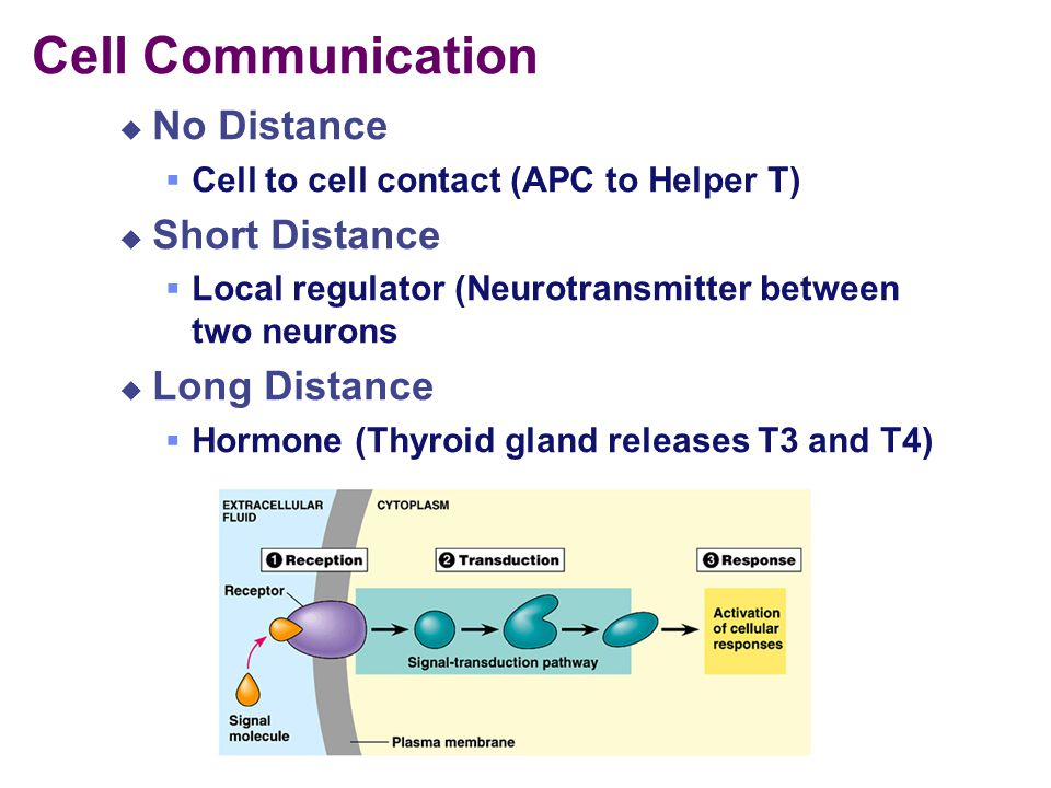 Cell Communication No Distance Short Distance Long Distance