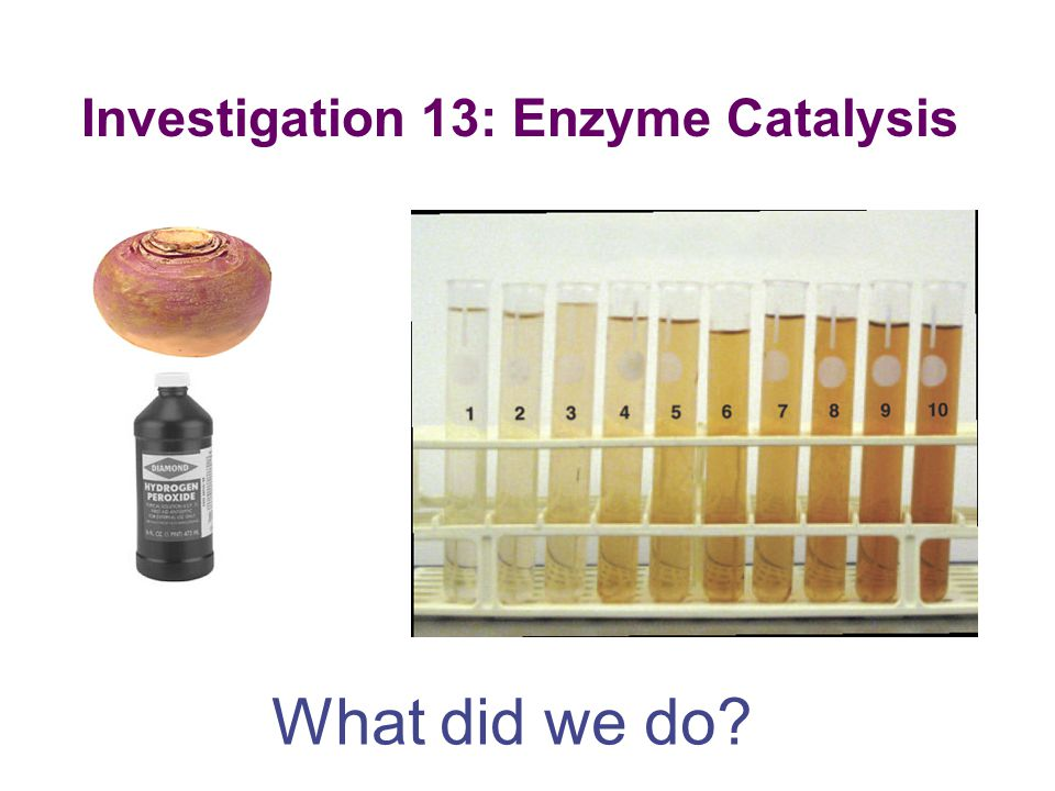 Investigation 13: Enzyme Catalysis