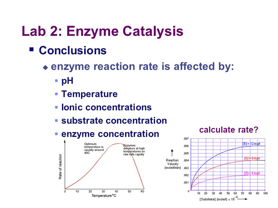 Lab 2: Enzyme Catalysis Conclusions