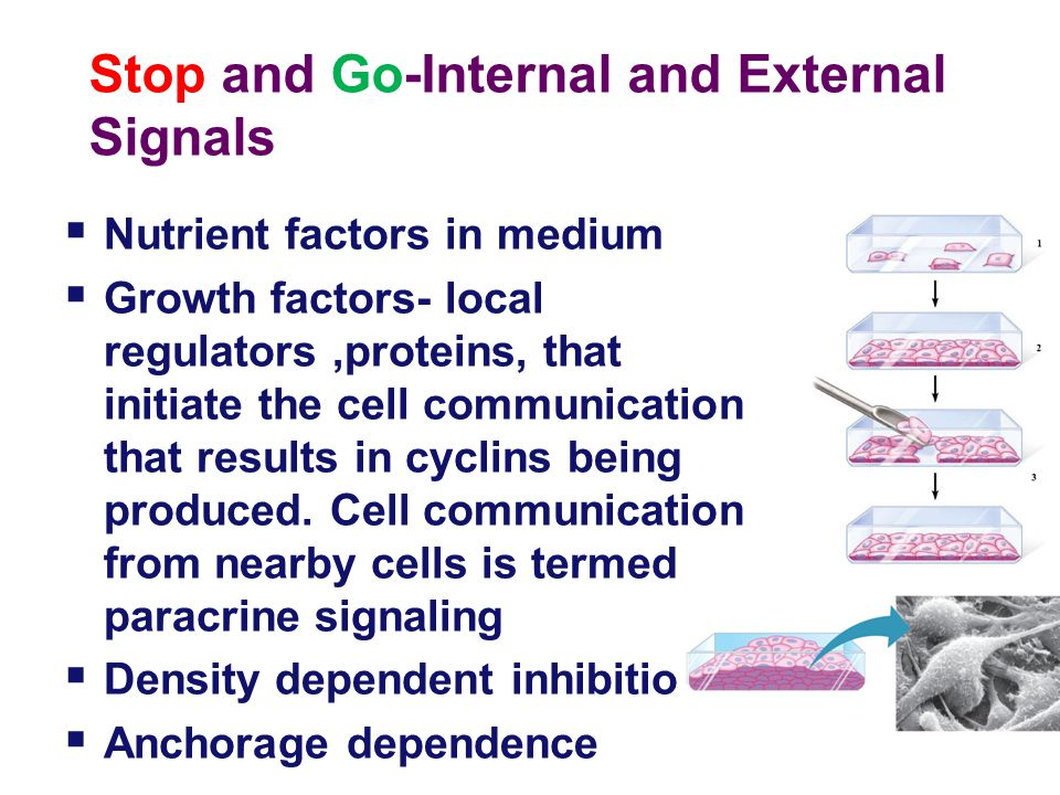 Stop and Go-Internal and External Signals