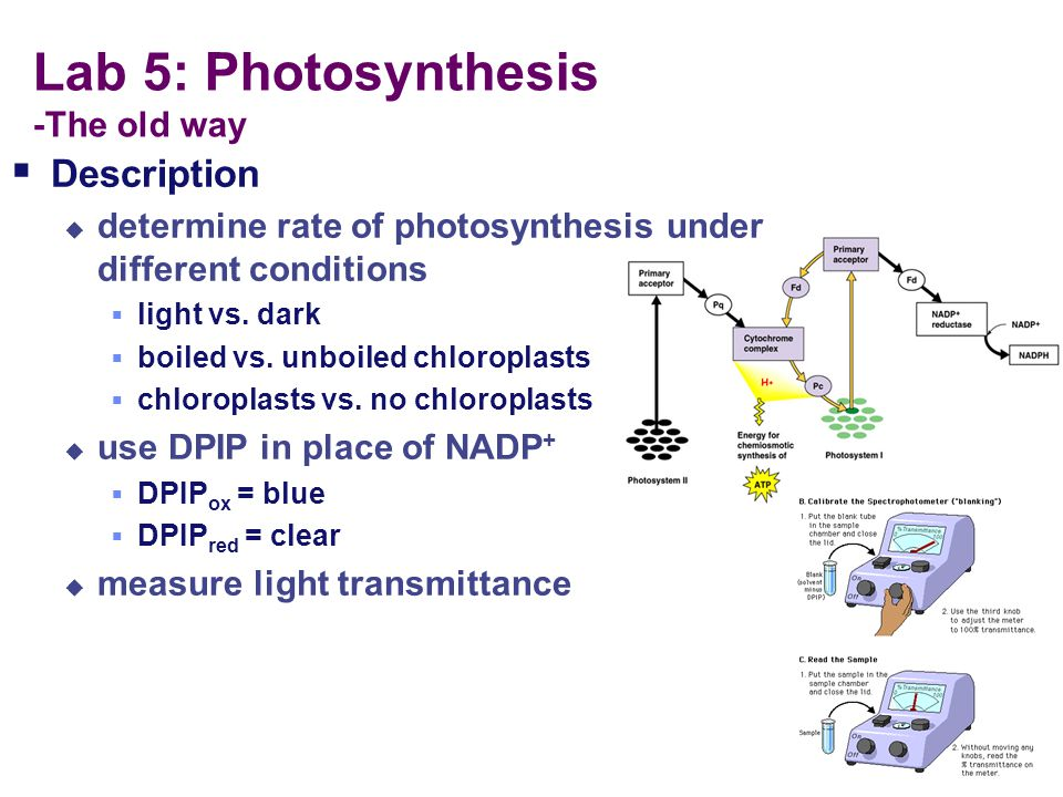 Lab 5: Photosynthesis -The old way