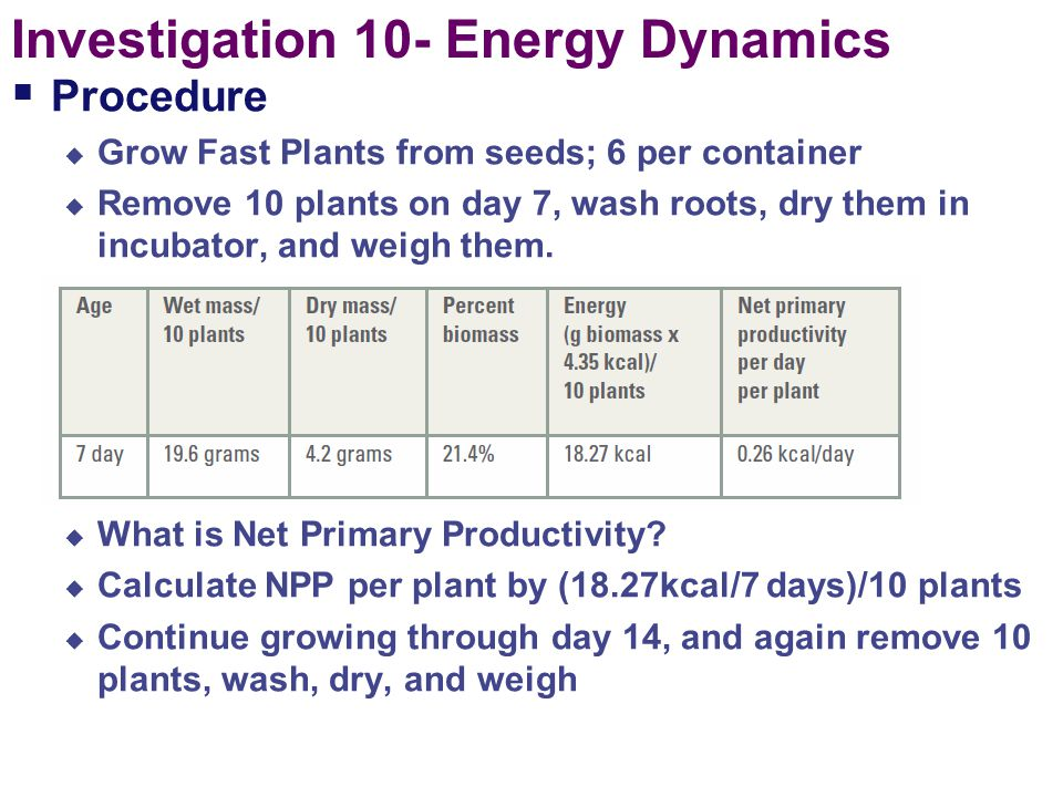Investigation 10- Energy Dynamics