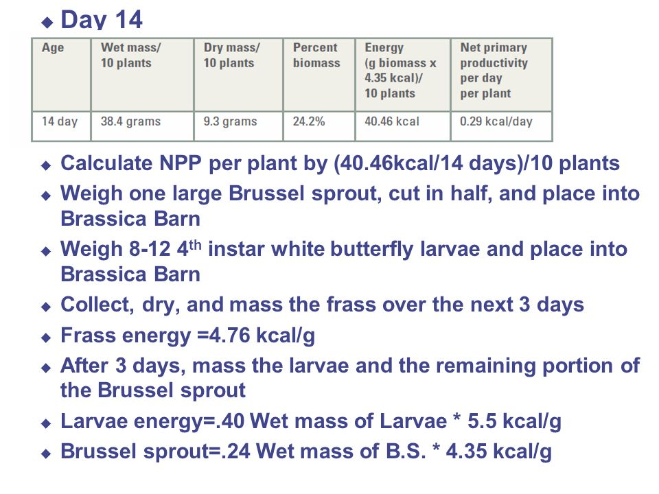 Day 14 \ Calculate NPP per plant by (40.46kcal/14 days)/10 plants