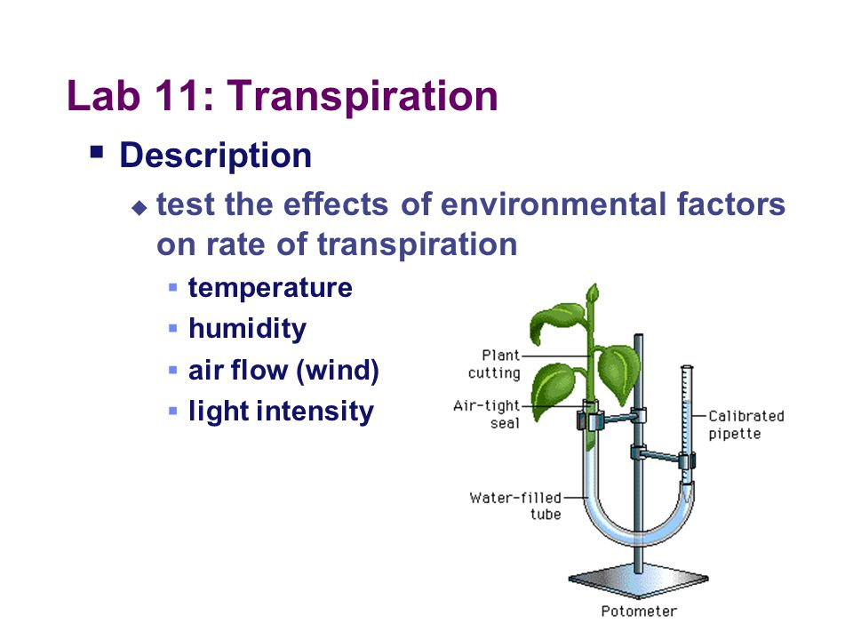 Lab 11: Transpiration Description