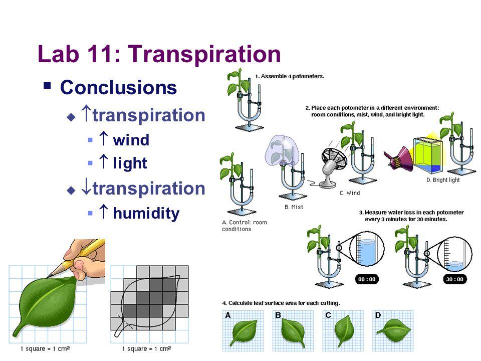 Lab 11: Transpiration Conclusions transpiration transpiration  wind